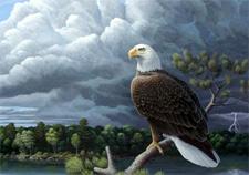 eaglestorm